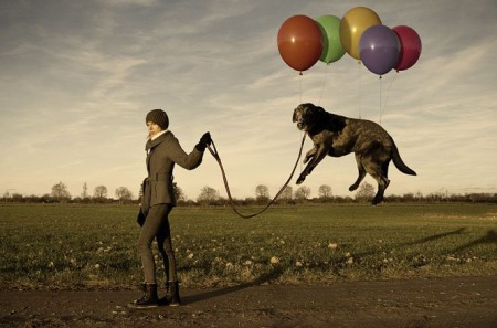 Erik Johansson - Lazy dogs