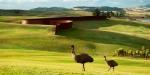 Richard Serra – Te Tuhirangi Contour