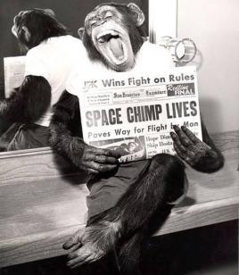 Uno scimpanzé posa dopo una missione di successo sullo spazio nel 1961