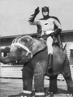 Batman a cavallo di un elefante, c. 1967