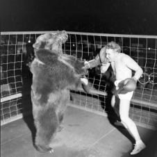 Gus Waldorf boxa con un orso nel 1949