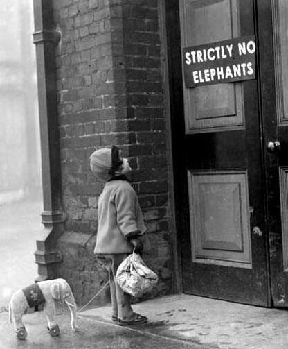 Ingresso vietato agli elefanti