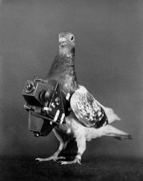 1908, piccione dotato di macchina fotografica per scattare foto aeree. Fotografia di Roger Viollet