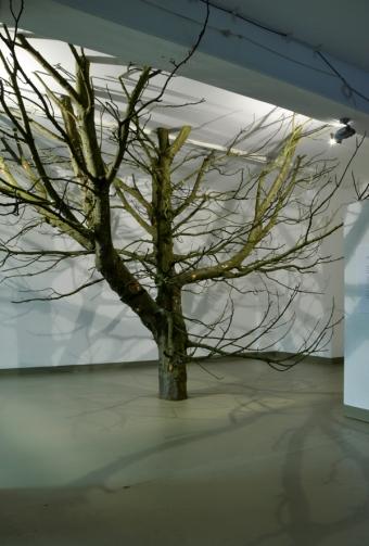 Giuseppe Licari - The sky in a room