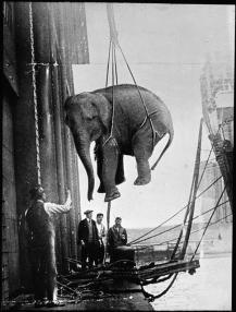 Il trasporto di un elefante da circo, 1930