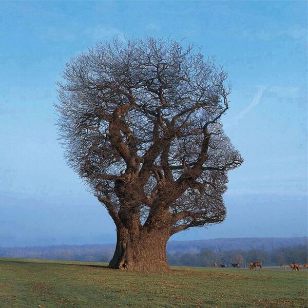 """Tree of Half Life""del fotografo ingleseStorm Thorgerson"