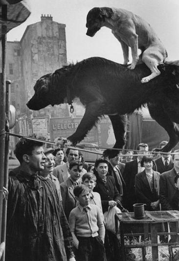"""Due cani acrobati"" Parigi, Francia, 1953. Foto di Marc Riboud"