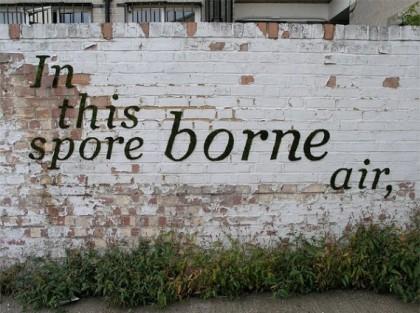 Environmental graffiti