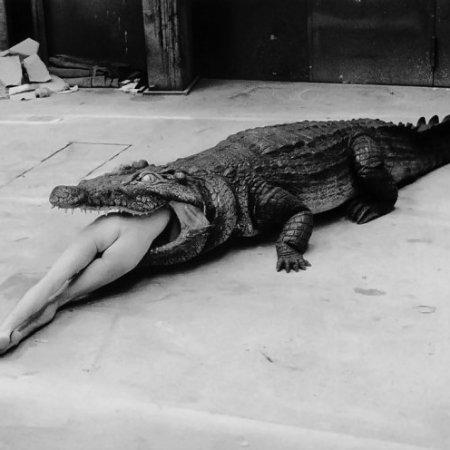 """""""Crocodile Eating Ballerina""""del fotografo tedesco (naturalizzato australiano)Helmut Newton"""