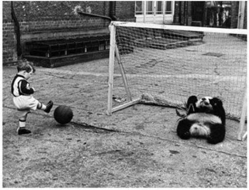 Un ragazzo gioca a calcio contro un panda gigante allo zoo di Londra 1939