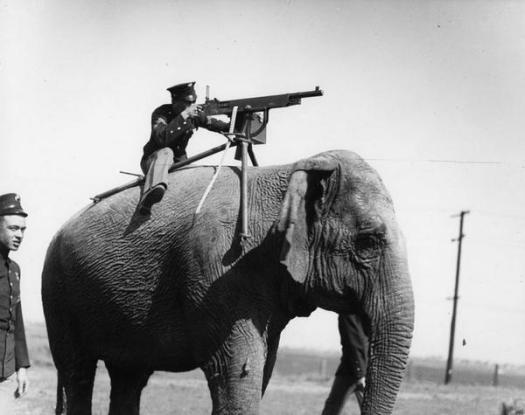 Elefante usato come porta mitragliatrice nella Prima Guerra Mondiale