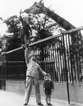 Una bambina dà da mangiare a una giraffa, circa 1950