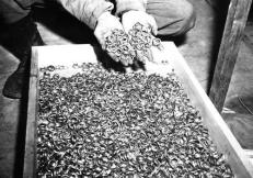 Anelli di nozze confiscati a Buchenwald, Seconda Guerra Mondiale