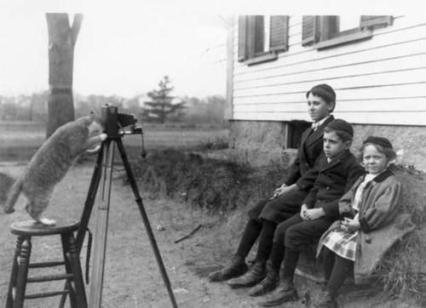 Il gatto di famiglia fa un ritratto dei bambini, Massachusetts 1909