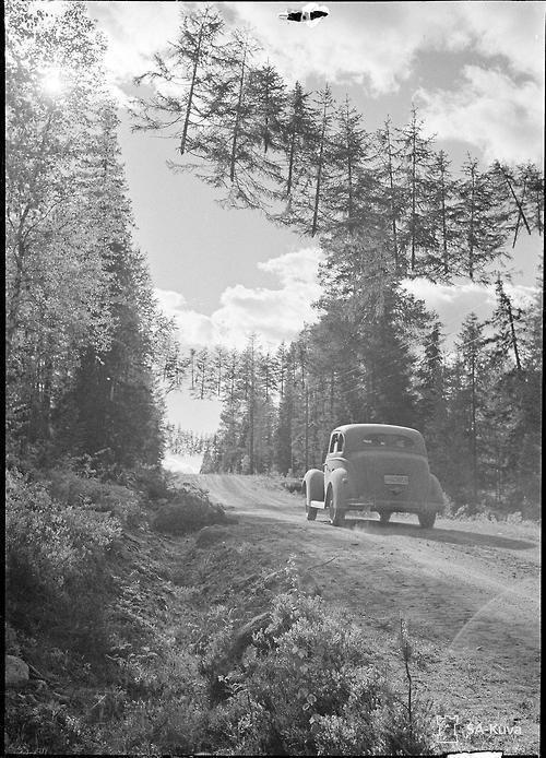 Un strada mimetizzata a 10 km dal confine con la Russia, Finlandia, 27 GIUGNO 1941
