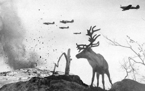 Una renna scioccata guarda gli aerei della Seconda Guerra Mondiale che fanno cadere bombe sulla Russia nel 1941