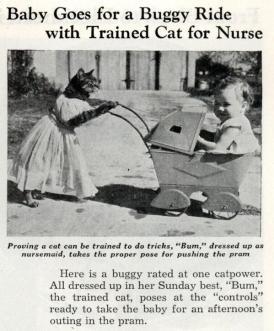 Un bambino fa un giro ne passeggino spinto dal suo gatto infermiere, agosto 1938