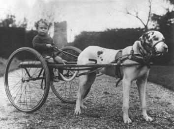 Dog chariot, c. 1930s