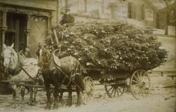 Carro di alberi di Natale, Hartford, ca. 1890 - Connecticut Historical Society and Connecticut History Online