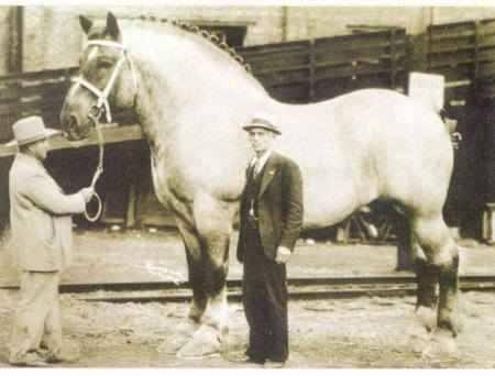 Il cavallo più grande del mondo di sempre. 1928-1948