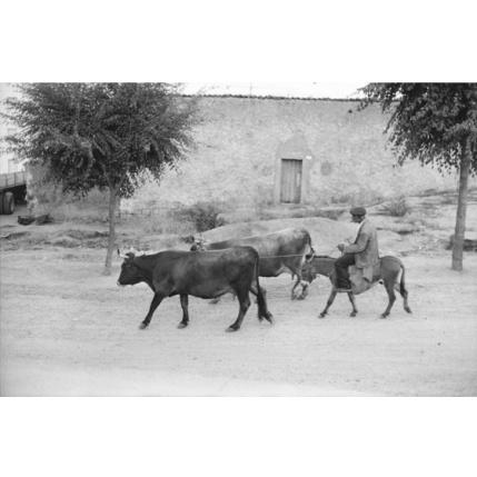 Henri Cartier-Bresson - Tra Nuoro e Siniscola, 1962