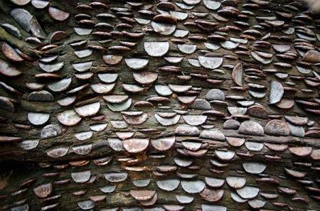 L'albero delle monete