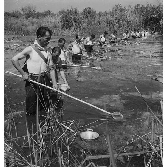 Suschitzky - Alla ricerca delle larve delle zanzare, sul fiume Cixerri, presso Siliqua, 1948