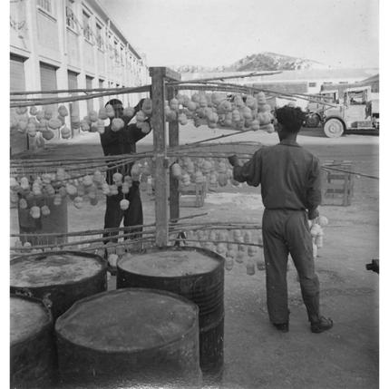 Suschitzky - Cagliari. Preparazione delle palle larvicide di DDT, 1948