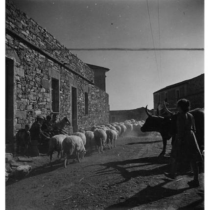 Suschitzky - Goni 1948