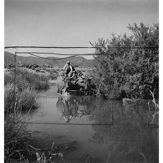 Suschitzky - Guado del fiume presso Muravera, 1948