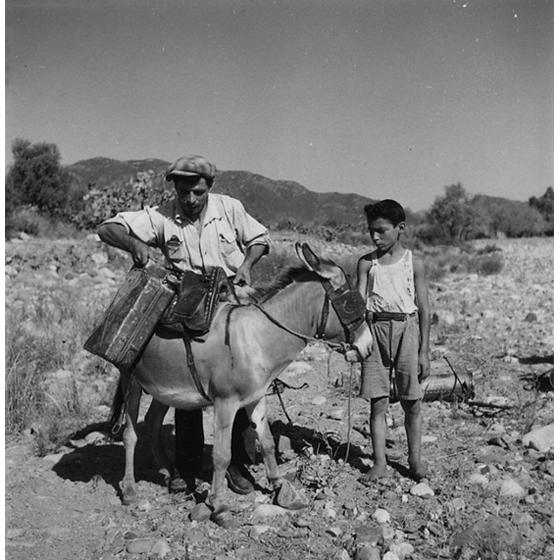 Suschitzky - Trasporto di bidoni di DDT su un asino, 1950