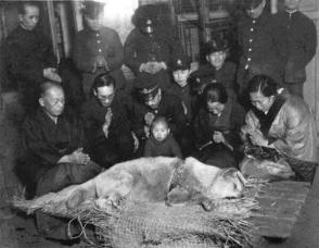 L'ultima foto di Hachiko, il cane che, dopo la morte del padrone, si recò ogni giorno, per quasi dieci anni, ad attenderlo invano, alla stazione in cui l'uomo prendeva il treno per recarsi al lavoro.