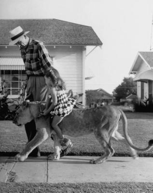 Una famiglia in Texas nel 1953 ebbe un leone domestico di nome Blondie. Non ci sono mai stati incidenti e l'animale morì di vecchiaia