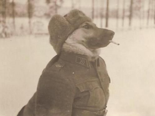 Cane militare finlandese nella seconda guerra mondiale