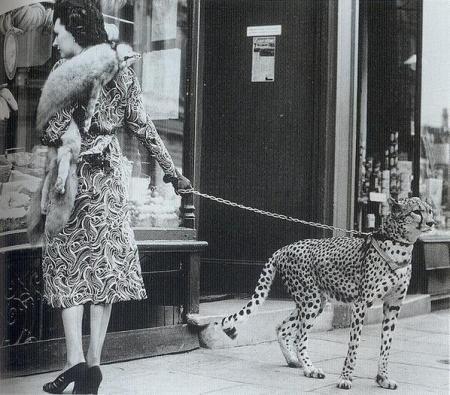 L'attrice Phyliss Gordon fa shopping con il suo ghepardo domestico, 1939