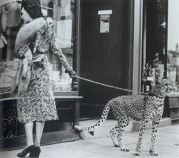 L'attrice Phyliss Gordon fa shopping con il suo ghepardo domestico, 1939