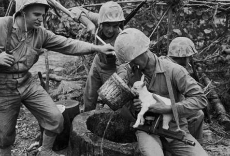 Soldati danno da bere a un agnellino