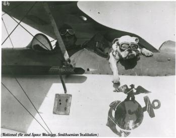 """Sergente Maggiore Jiggs è stato il primo bulldog a """"servire"""" nel Corpo dei Marines come mascotte. Il bulldog divenne un importante simbolo del Corpo della Marina durante la prima guerra mondiale."""
