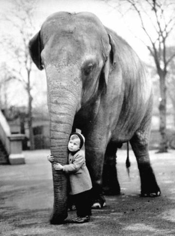 Amici improbabili allo zoo di Londra, 1958 foto di Edward Grossi