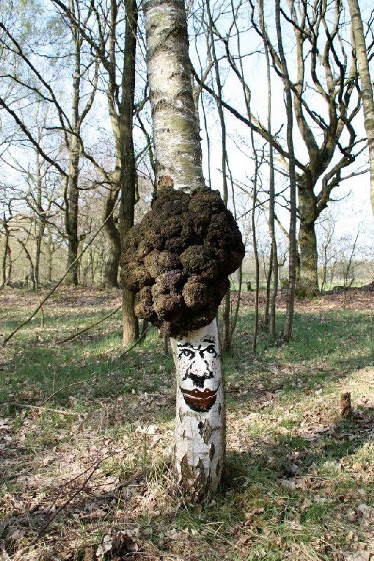 """The Tree Project""del duo artistico tedescoZonenkinder"