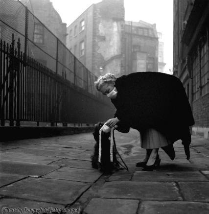 Londra, una donna indossa una maschera contro lo smog e la mette anche al suo cane, 1953