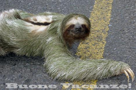 Scatena anche tu il bradipo che è in te!