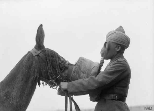 Maschera antigas montata su un mulo da un soldato sikh dell'esercito indiano britannico durante la seconda guerra mondiale