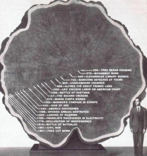 La vita di un albero