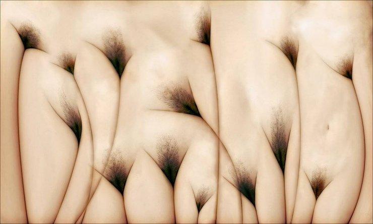 """""""The Pubis Field"""" dell'artista Twitchkowitz"""