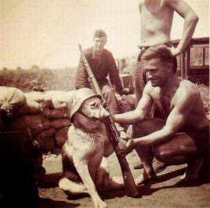 Un cane messo in posa da un soldato tedesco, ca. 1940