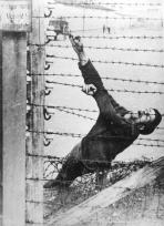 Auschwitz, Polonia, 1943, un detenuto che si è suicidato sul recinto elettrificato