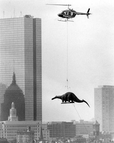Il trasferimento di un dinosauro al Museo delle Scienze (1984)