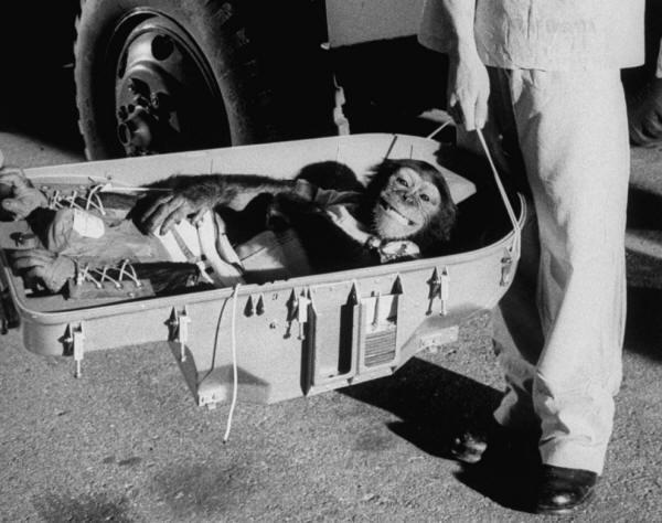 Ham lo scimpanzé ritorna sulla Terra, 1961