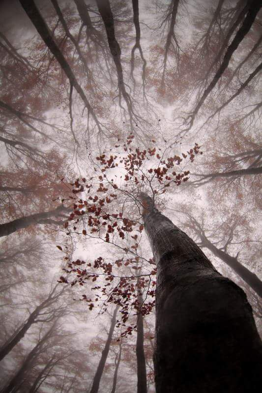 """Into the trees"" by Jonathan Lhoir"